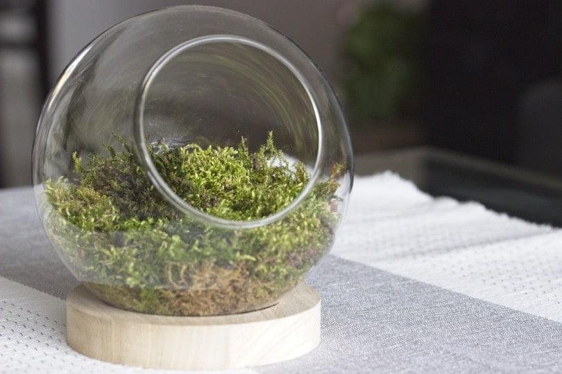 Installation de la mousse dans ma boule en verre MDM