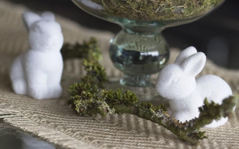 Petits lapins et branche couverte de lichen
