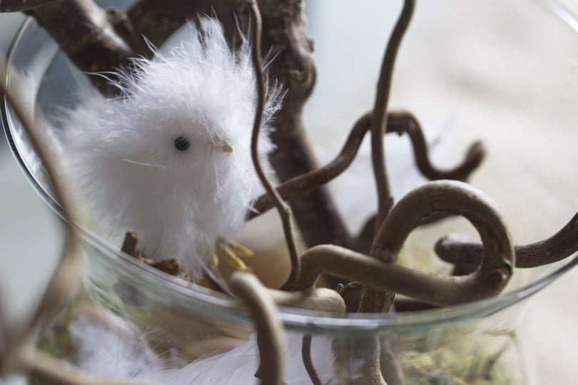 Petit poussin en plumes