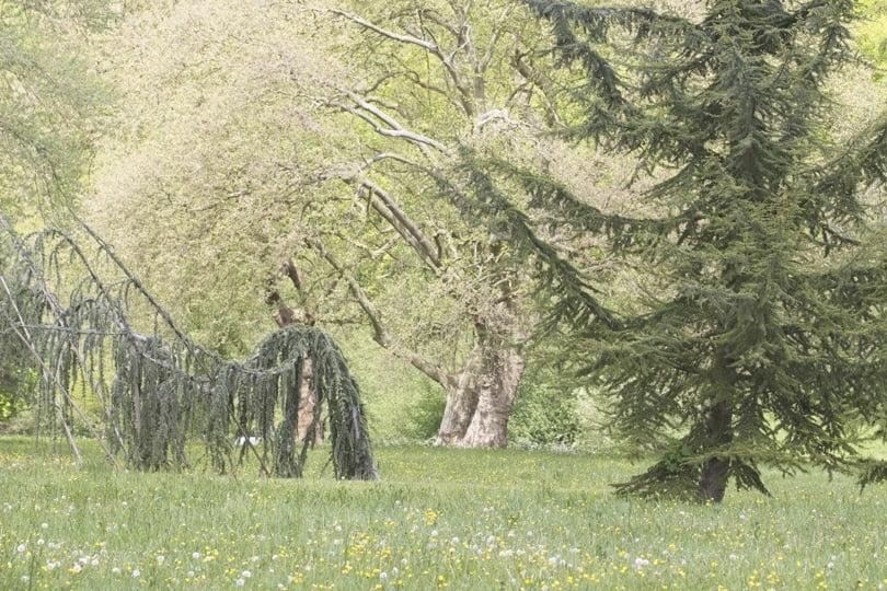 Arbres du parc du château d'Acquigny