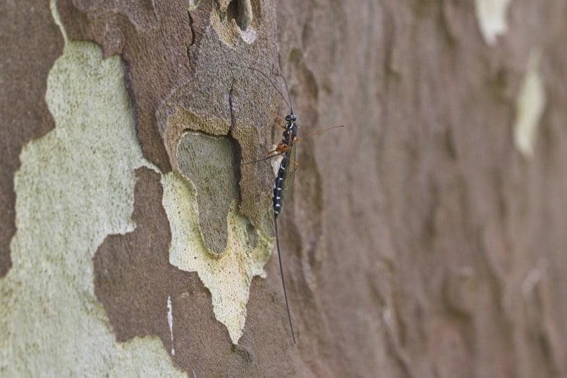 Insecte au château d'Acquigny