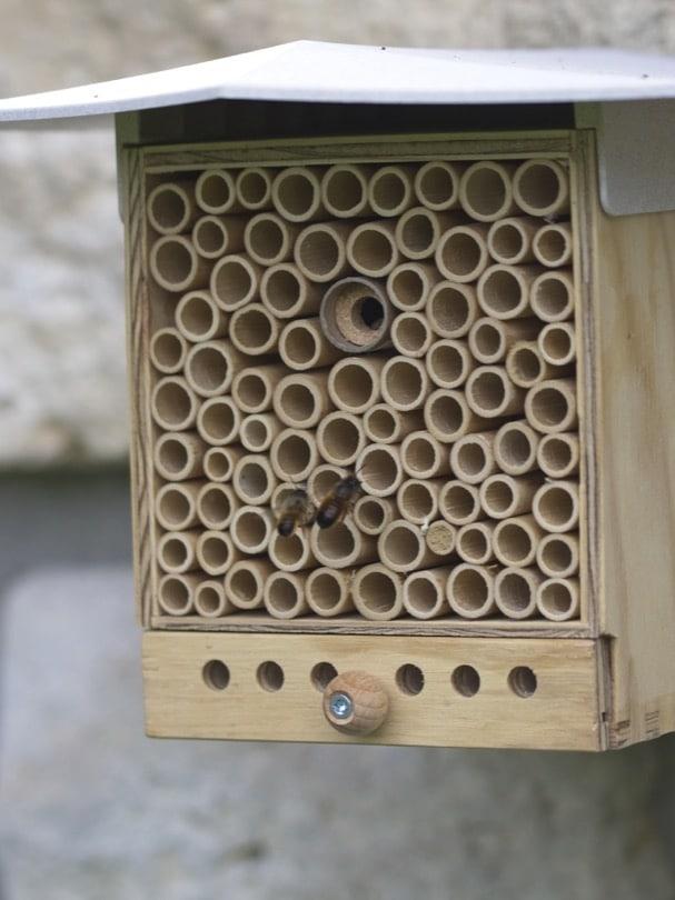 Les abeilles solitaires autour de la BeeHome