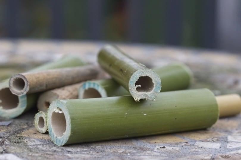 bambou pour hotel à abeilles solitaires