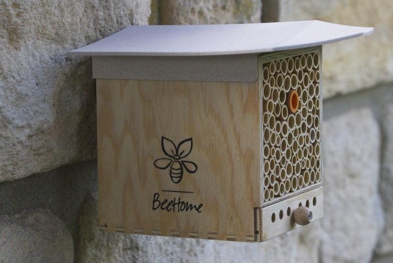 BeeHome avec tiroir d'observation