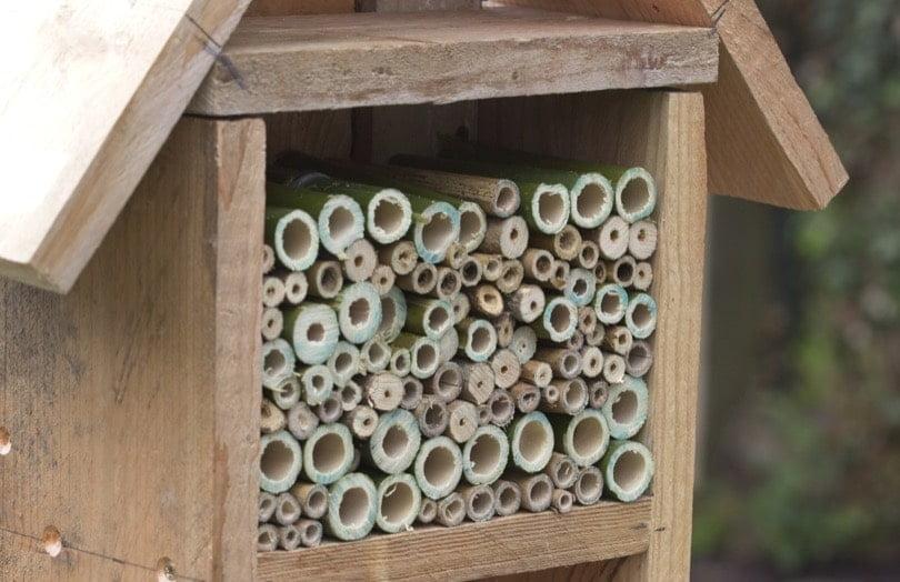 Remplissage de l'hotel à abeilles solitaires