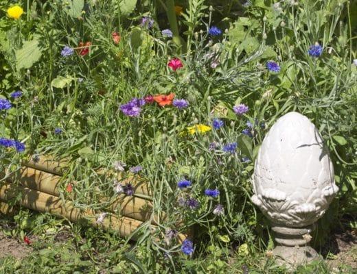 Décorer une prairie fleurie