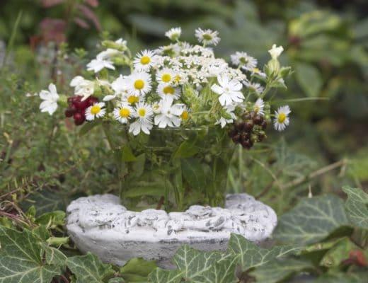 Fleurs sauvages pour bouquets d'été