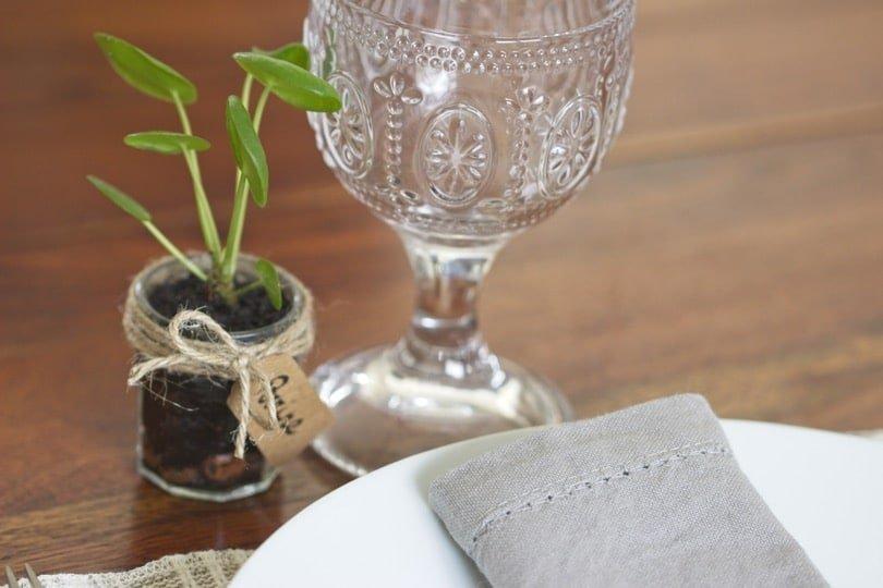 Marque place végétal avec des boutures de pilea