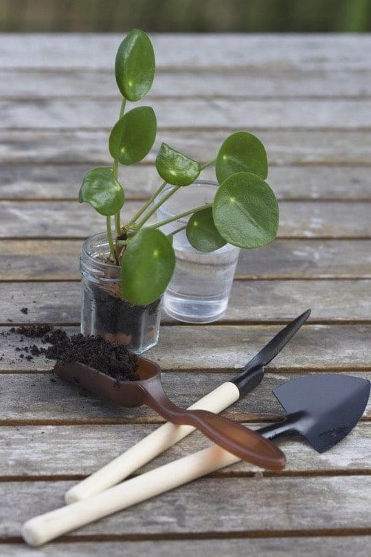 Mini outils pour petite plantation