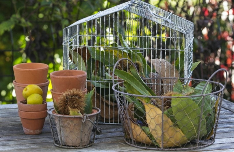 La récup' au jardin, détouner une cage à oiseaux