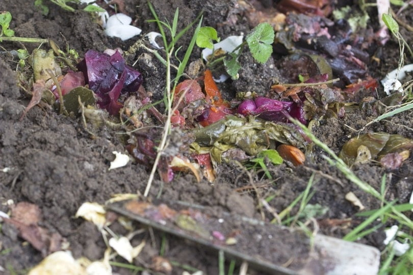 Déchets issus du Bokashi, compost naturel