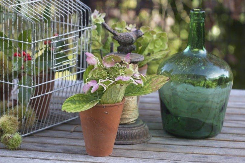 Dame Jeanne et petit pot en terre cuite pour une déco récup' au jardin
