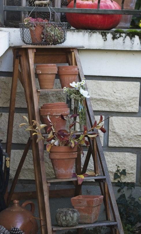 La récup' au jardin avec un escabeau en bois