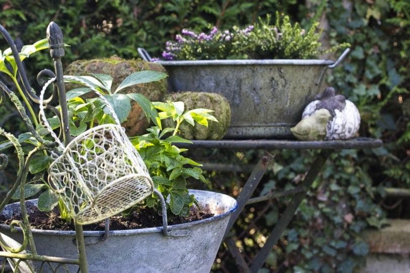 la récup' au jardin avec des bassines en zinc