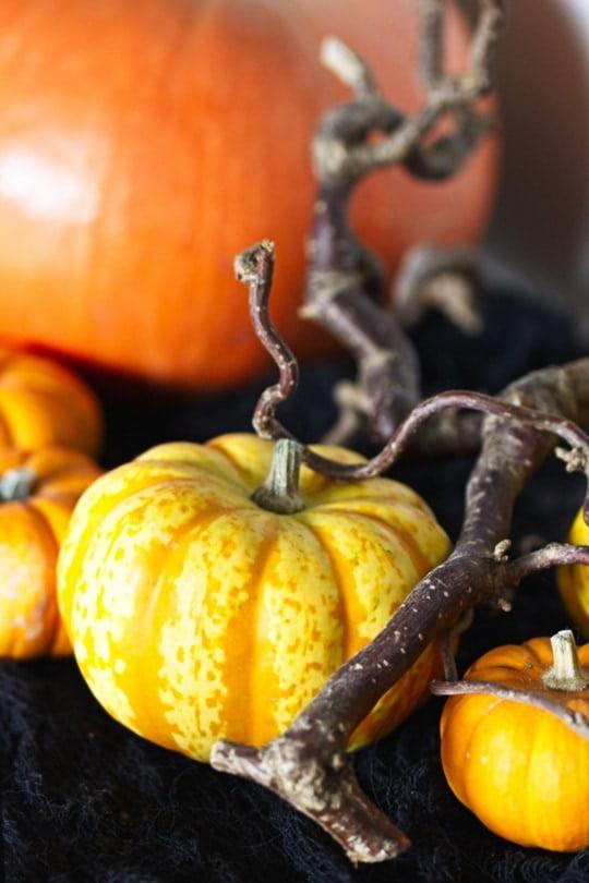 Décorations pour Halloween avec des coloquintes