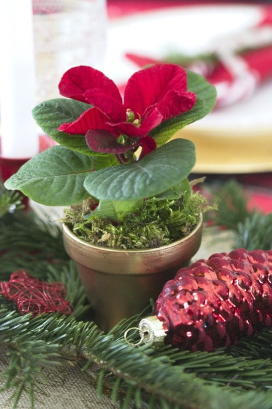 Poinsettia sur la table de Noël
