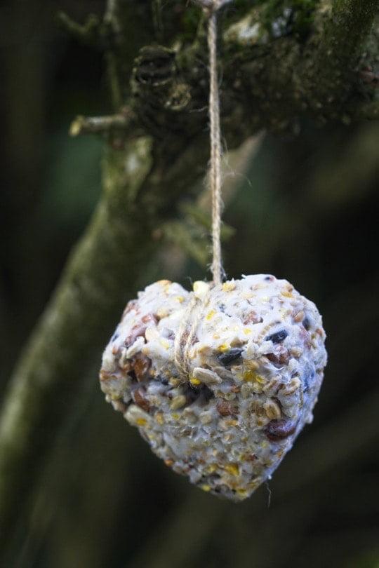 Petit coeur dans le forsythia