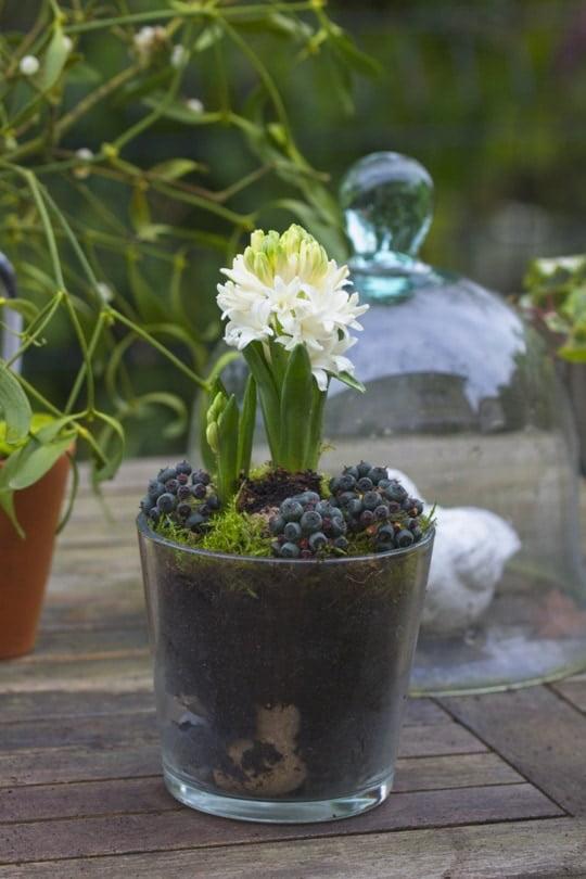 Décorer son intérieur avec des jacinthes forcées