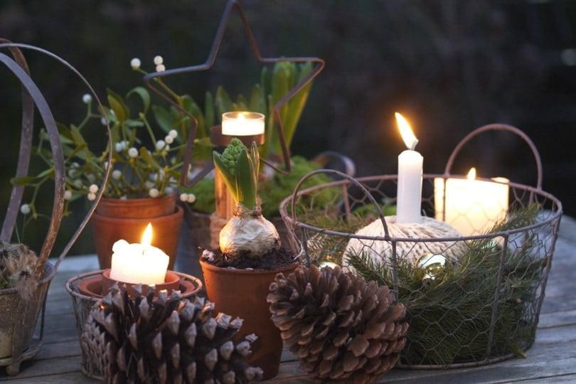 Mettre en valeur des jacinthes en décembre