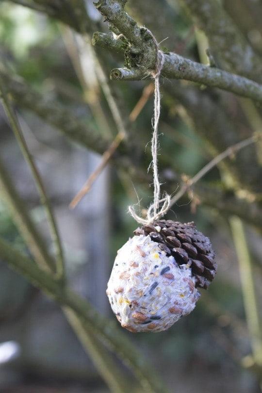 Pomme de pin et saindoux pour nourrir les oiseaux