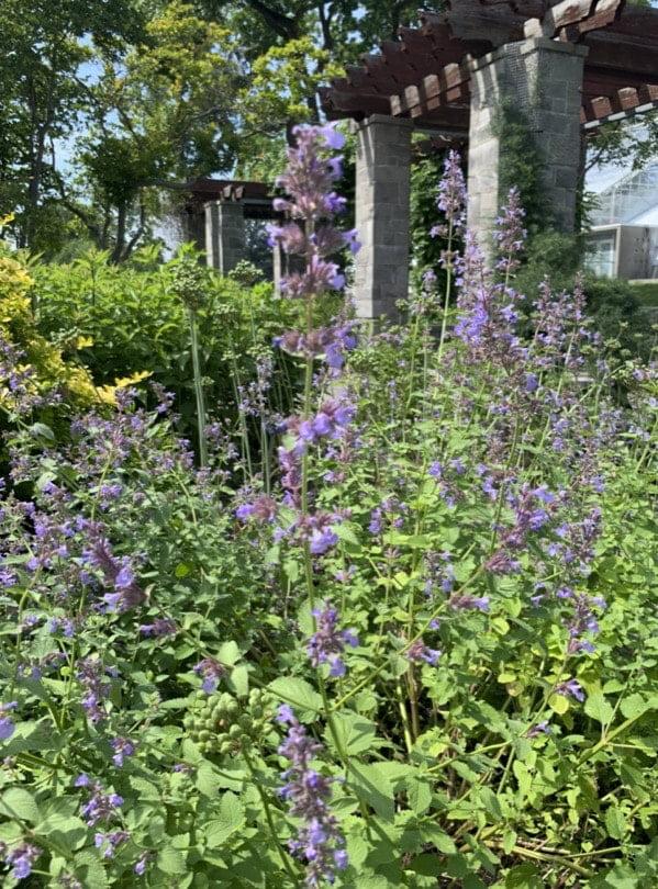 jardin des vivaces à Montréal