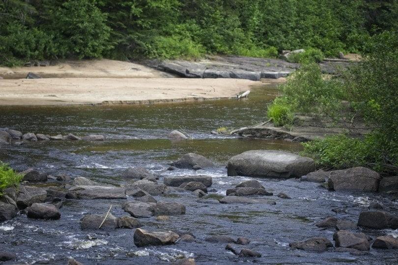 Rivière au coeur du zoo sauvage de Saint Félicien