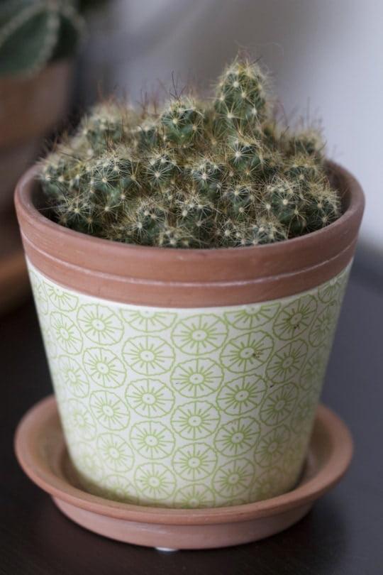 Au printemps on relance le nourrissage des cactus