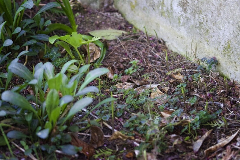 Jardin avant désherbage