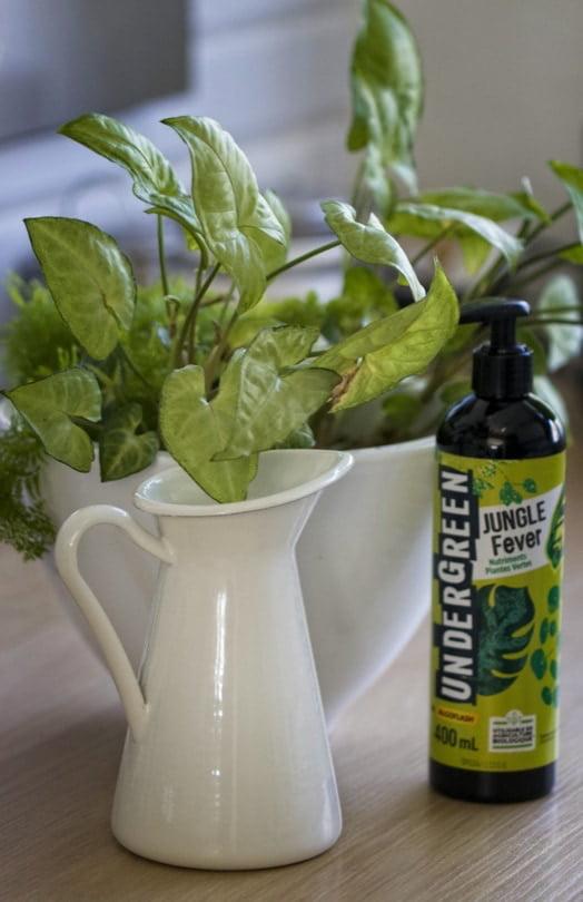 Nourrir ses plantes au printemps pour un bel intérieur green