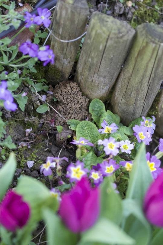 Monticule de terre des abeilles terrestres