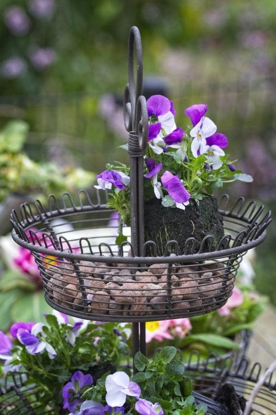 Plantaion de violas dans une corbeille à fruits