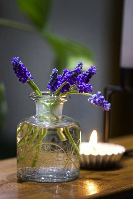 Premier bouquet de muscaris