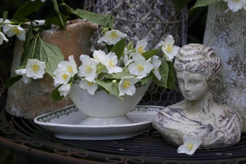 Le coin romantique shabby chic du jardin avec du seringat