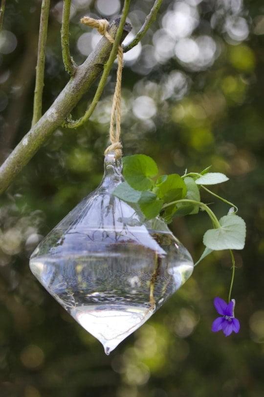 Pied de violette dans un vase suspendu