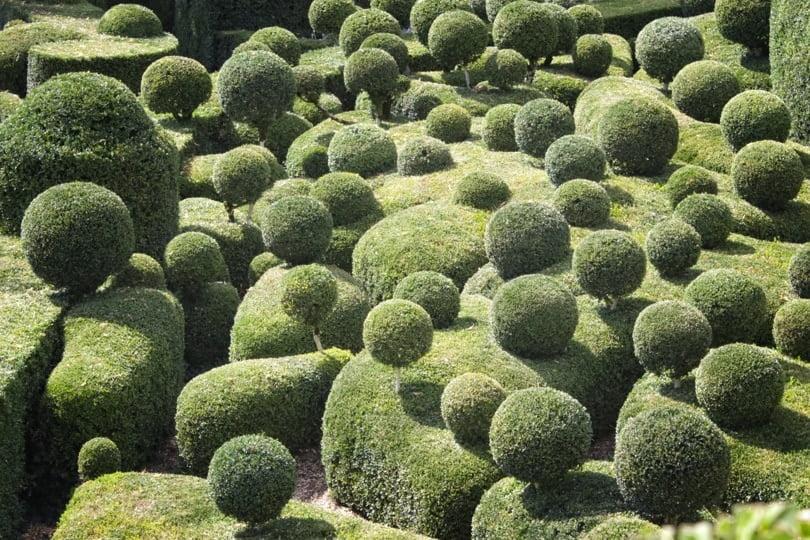 Chaos de buis aux jardins de Marqueyssac