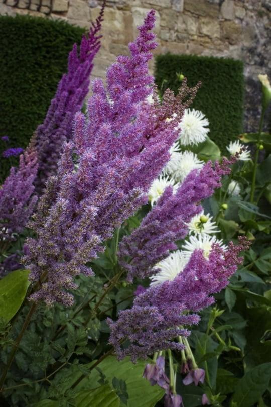 Des fleurs au château de Hautefort