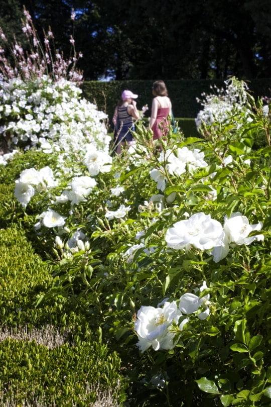 jardin blanc d'Eyrignac