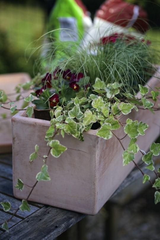 Installation des végétaux dans la jardinière automnale