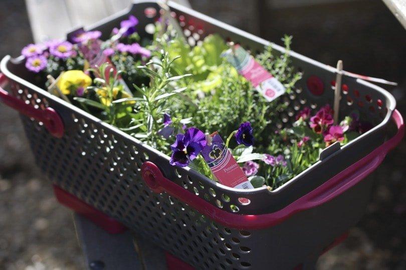 Plantes Vive le végétal