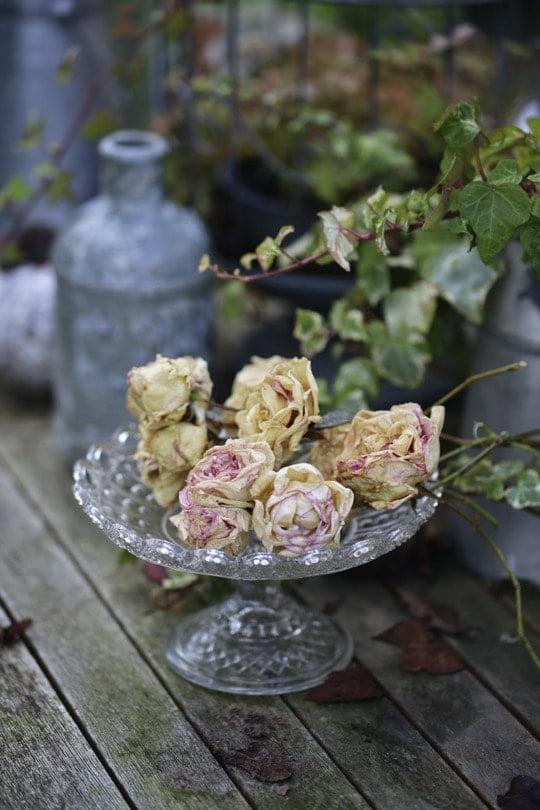 Des roses séchées pour une décoration automnale poétique