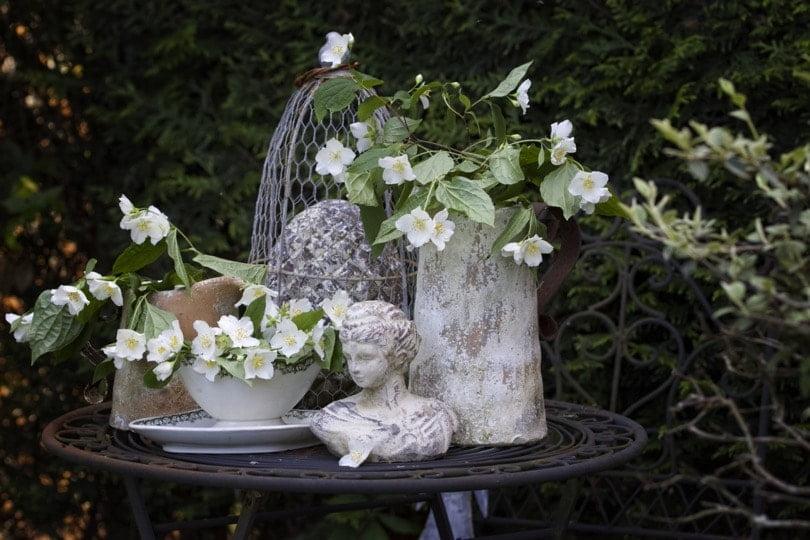 Mon jardin au printemps, composition avec du seringat