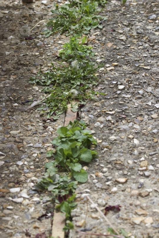 Se débarrasser des mauvaises herbes dans les joints d'une terrasse
