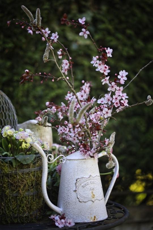 Fleurs de prunus dans un arrosoir Loberon