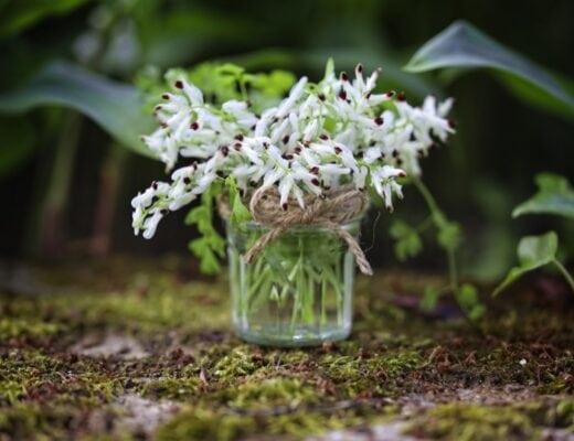 Bouquet de fleurs sauvages : fumeterre blanche
