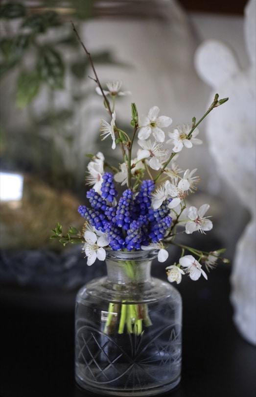 Premier bouquet du printemps avec des muscaris